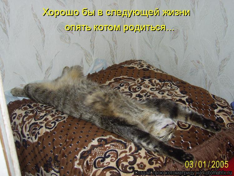 Котоматрица: Хорошо бы в следующей жизни опять котом родиться...