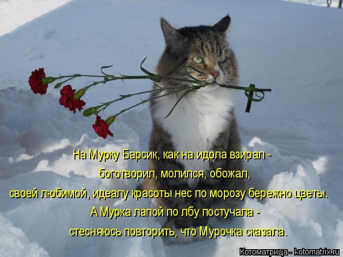 Котоматрица: На Мурку Барсик, как на идола взирал -  боготворил, молился, обожал, своей любимой, идеалу красоты нес по морозу бережно цветы. А Мурка лапой п