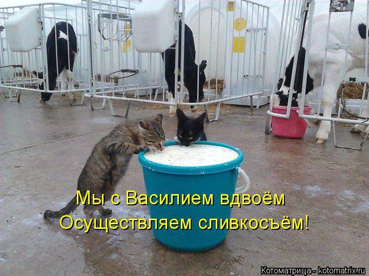 Котоматрица: Мы с Василием вдвоём Осуществляем сливкосъём!