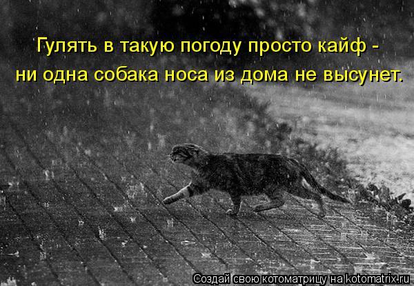 Котоматрица: Гулять в такую погоду просто кайф -  ни одна собака носа из дома не высунет.