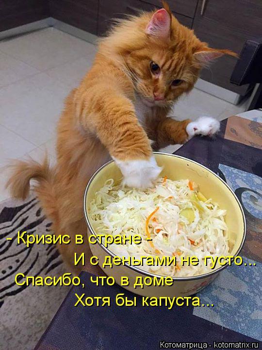 Котоматрица: - Кризис в стране -  И с деньгами не густо... Спасибо, что в доме Хотя бы капуста...