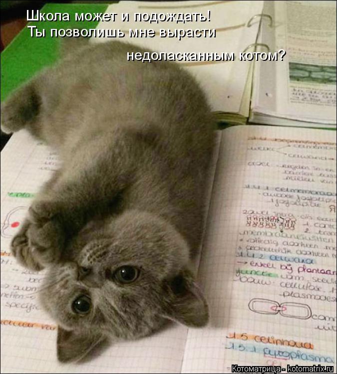 Котоматрица: Школа может и подождать! Ты позволишь мне вырасти  недоласканным котом?