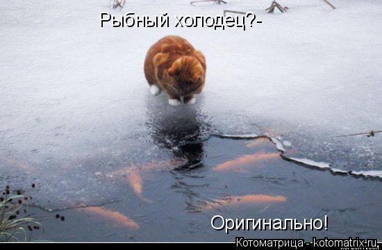 Котоматрица: Рыбный холодец?- Оригинально!