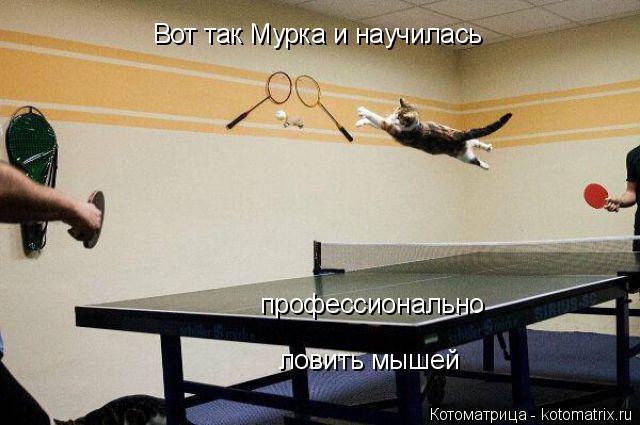 Котоматрица: профессионально Вот так Мурка и научилась ловить мышей