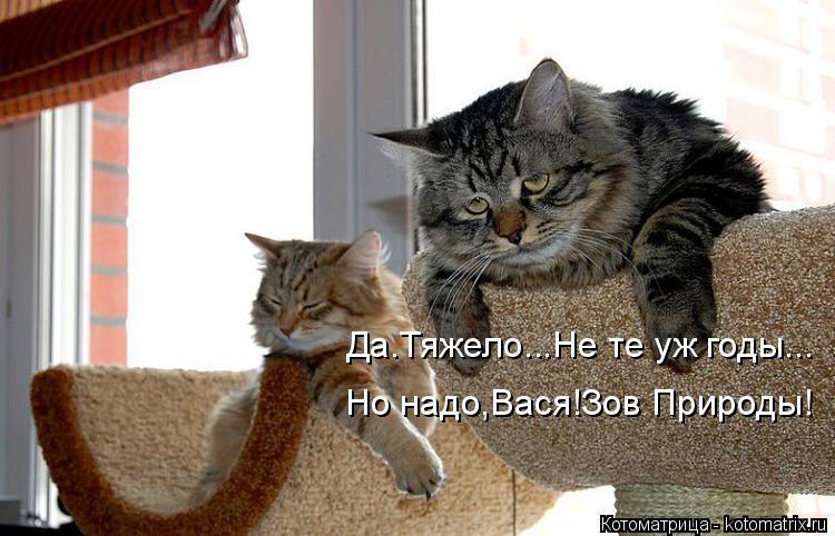 Котоматрица: Да.Тяжело...Не те уж годы... Но надо,Вася!Зов Природы!