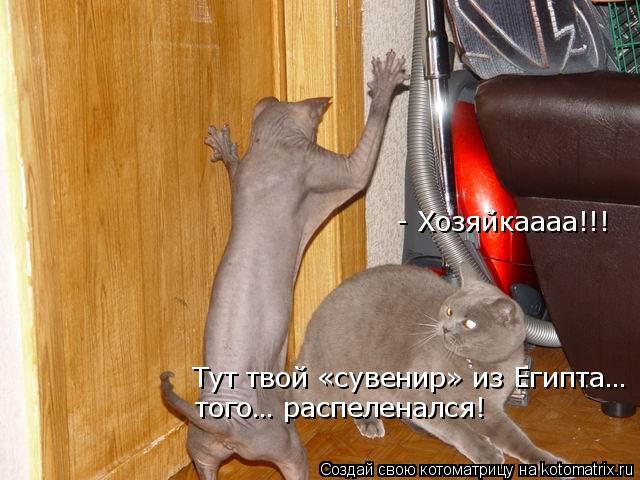 Котоматрица: - Хозяйкаааа!!!  Тут твой «сувенир» из Египта… того… распеленался!