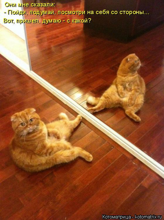 Котоматрица: Они мне сказали:  - Пойди, подумай, посмотри на себя со стороны... Вот, пришел, думаю - с какой?