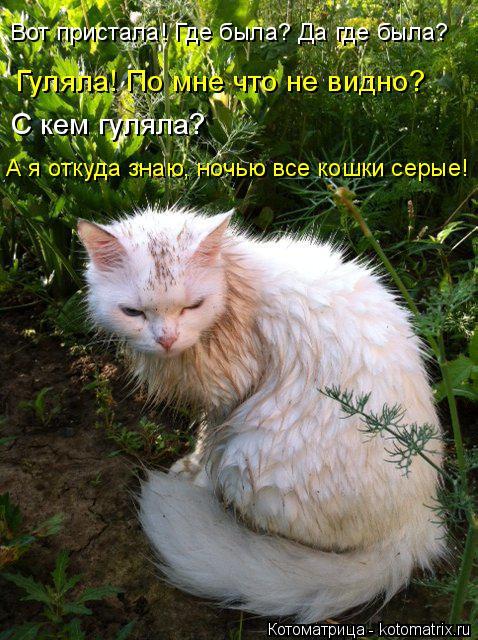 Котоматрица: С кем гуляла?  А я откуда знаю, ночью все кошки серые! Гуляла! По мне что не видно? Вот пристала! Где была? Да где была?
