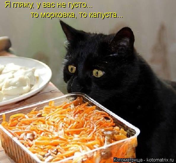 Котоматрица: Я гляжу, у вас не густо... то морковка, то капуста...