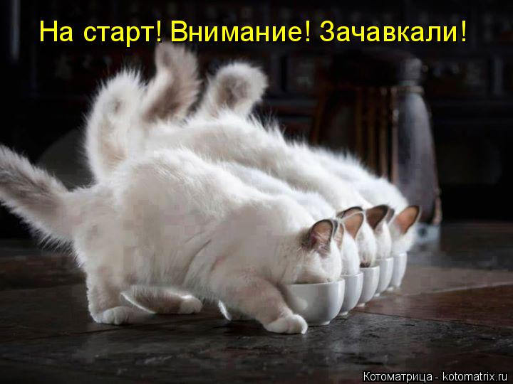 Котоматрица: На старт! Внимание! Зачавкали!