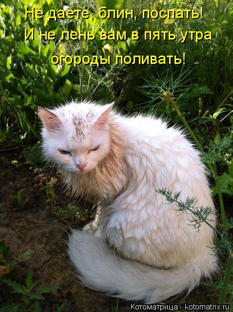 Котоматрица: Не даете, блин, поспать! И не лень вам в пять утра огороды поливать!