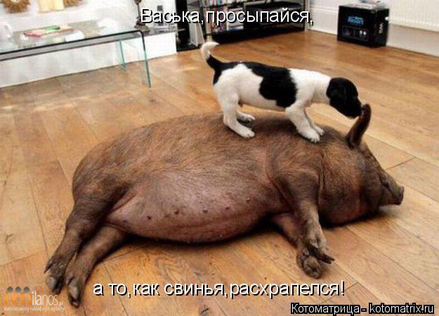 Котоматрица: Васька,просыпайся, а то,как свинья,расхрапелся!