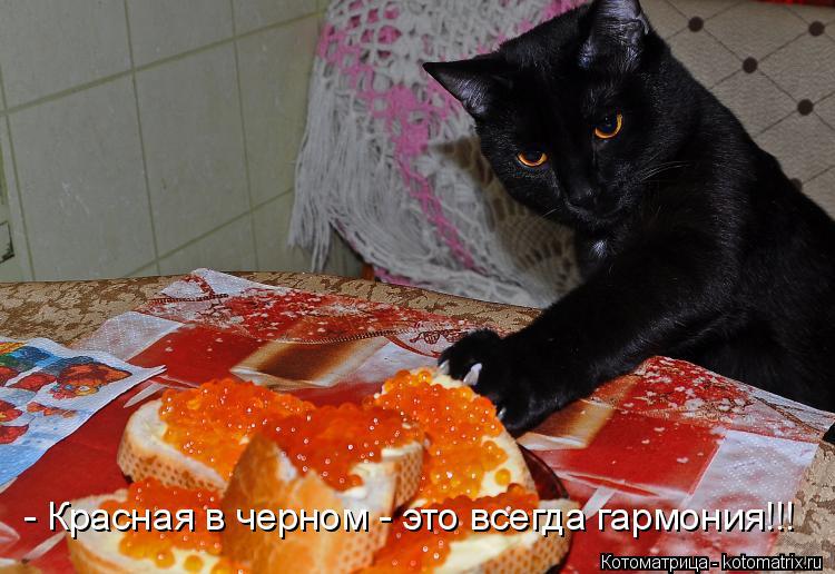 Котоматрица: - Красная в черном - это всегда гармония!!!