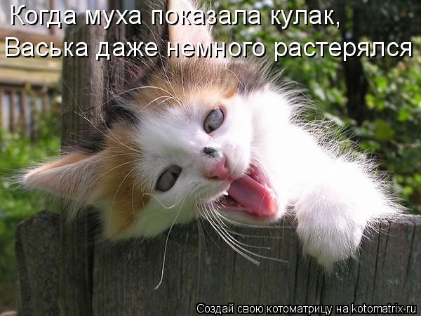 Котоматрица: Когда муха показала кулак, Васька даже немного растерялся