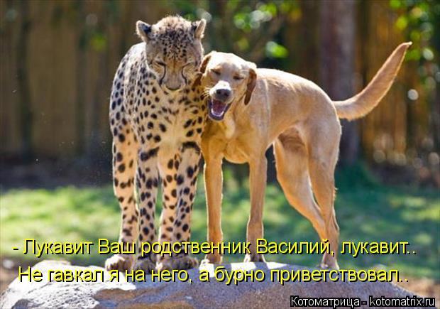 Котоматрица: - Лукавит Ваш родственник Василий, лукавит..  Не гавкал я на него, а бурно приветствовал..