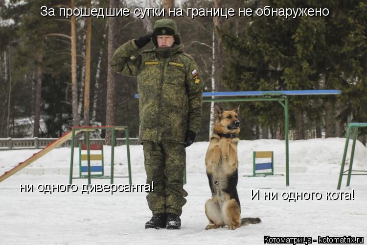 Котоматрица: За прошедшие сутки на границе не обнаружено ни одного диверсанта! И ни одного кота!