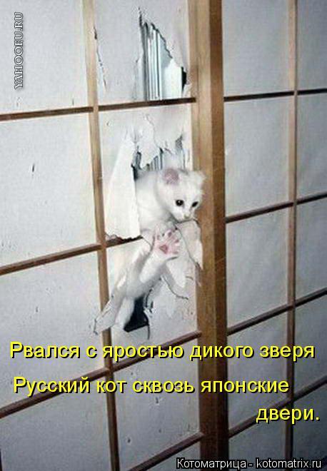 Котоматрица: Рвался с яростью дикого зверя Русский кот сквозь японские двери.