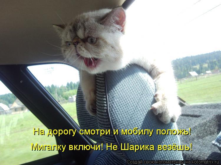 Котоматрица: На дорогу смотри и мобилу положь! Мигалку включи! Не Шарика везёшь!