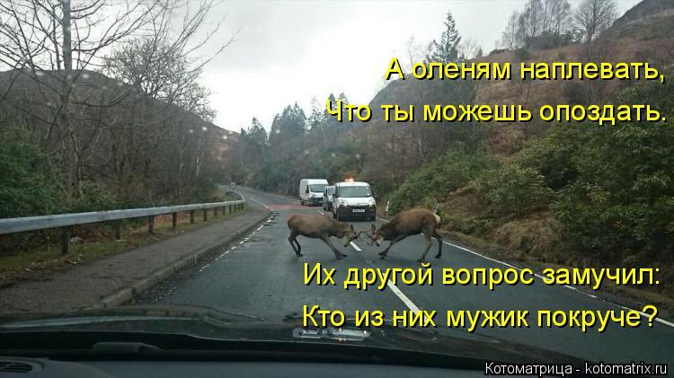 Котоматрица: А оленям наплевать, Что ты можешь опоздать. Их другой вопрос замучил: Кто из них мужик покруче?