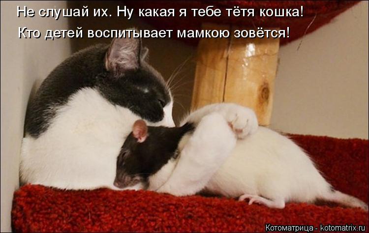 Котоматрица: Не слушай их. Ну какая я тебе тётя кошка! Кто детей воспитывает мамкою зовётся!
