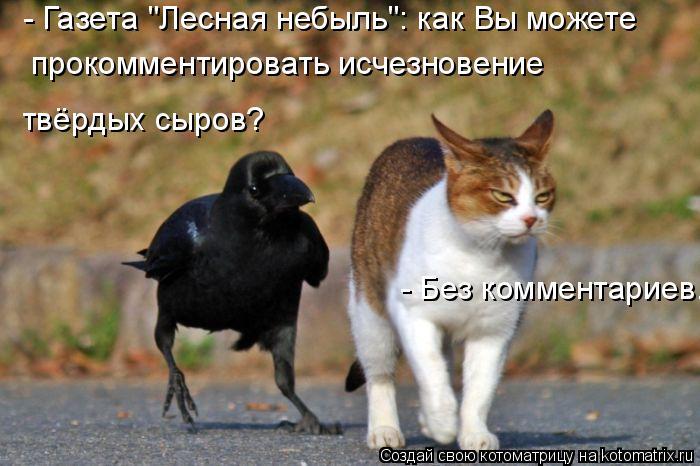 """Котоматрица: - Газета """"Лесная небыль"""": как Вы можете прокомментировать исчезновение твёрдых сыров? - Без комментариев."""