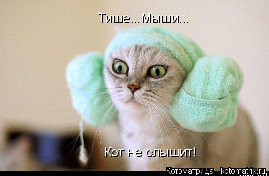 Котоматрица: Тише...Мыши... Кот не слышит!