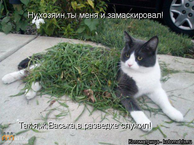 Котоматрица: Ну,хозяин,ты меня и замаскировал! Так я,ж,Васька,в разведке служил!