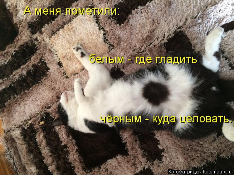 Котоматрица: А меня пометили: белым - где гладить чёрным - куда целовать...