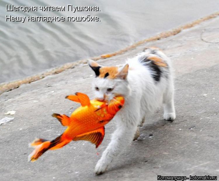 Котоматрица: Шегодня читаем Пушкина. Нешу наглядное пошобие.