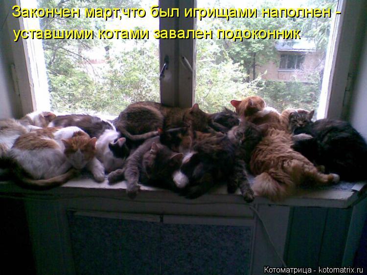 Котоматрица: Закончен март,что был игрищами наполнен - уставшими котами завален подоконник