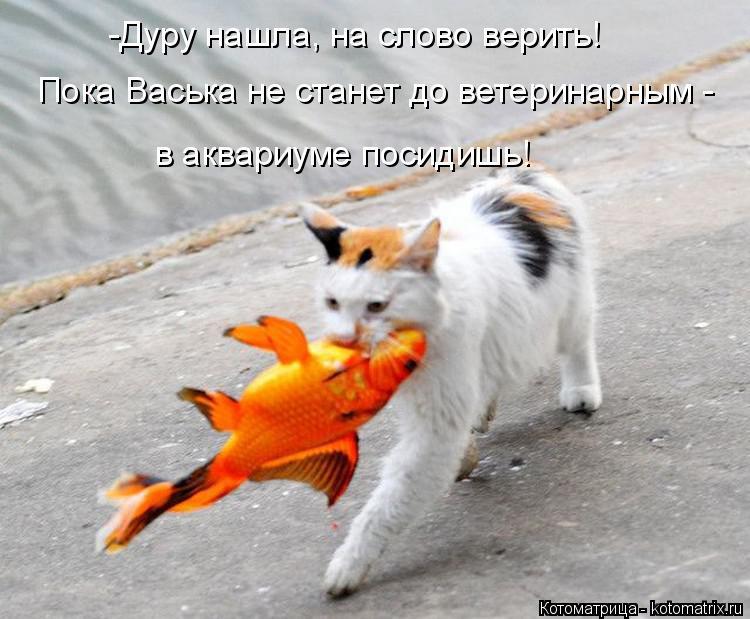 Котоматрица: -Дуру нашла, на слово верить! Пока Васька не станет до ветеринарным - в аквариуме посидишь!