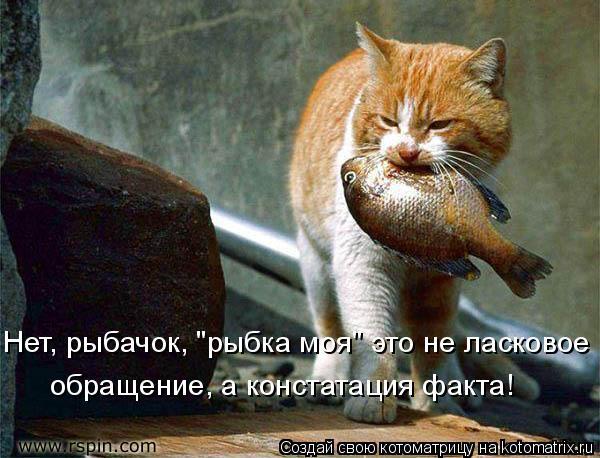 """Котоматрица: Нет, рыбачок, """"рыбка моя"""" это не ласковое обращение, а констатация факта!"""