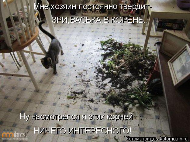 Котоматрица: Мне хозяин постоянно твердит- ЗРИ,ВАСЬКА,В КОРЕНЬ... Ну насмотрелся я этих корней НИЧЕГО ИНТЕРЕСНОГО!