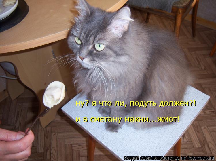 Котоматрица: ну? я что ли, подуть должен?!  и в сметану макни...жмот!