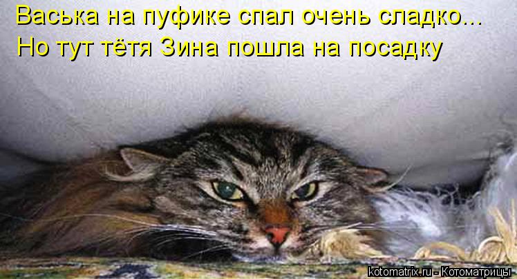 Котоматрица: Васька на пуфике спал очень сладко... Но тут тётя Зина пошла на посадку