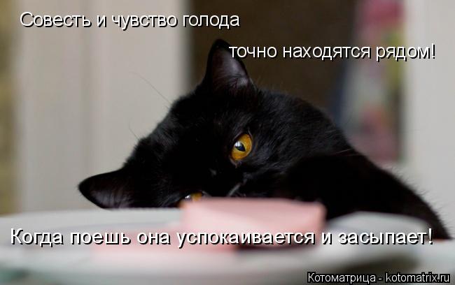 Котоматрица: Совесть и чувство голода  точно находятся рядом! Когда поешь она успокаивается и засыпает!