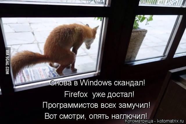 Котоматрица: Снова в Windows скандал! Программистов всех замучил! Вот смотри, опять наглючил!  Firefox  уже достал!
