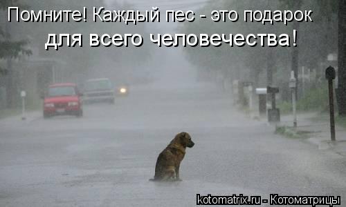 Котоматрица: Помните! Каждый пес - это подарок  для всего человечества!