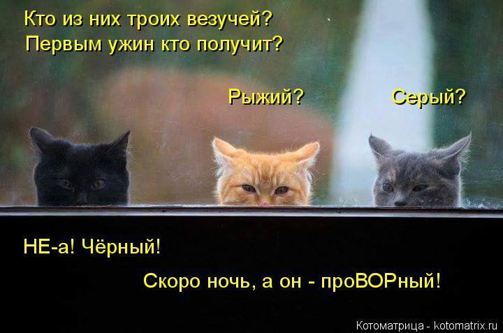 Котоматрица: Кто из них троих везучей? Первым ужин кто получит? Рыжий?               Серый?  НЕ-а! Чёрный! Скоро ночь, а он - проВОРный!