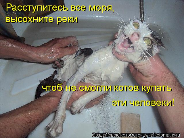 Котоматрица: Расступитесь все моря, высохните реки чтоб не смогли котов купать эти человеки!