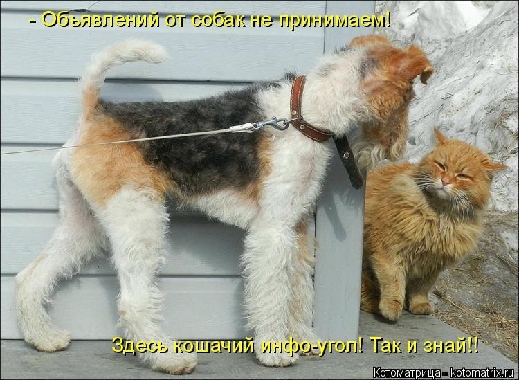 Котоматрица: - Объявлений от собак не принимаем! Здесь кошачий инфо-угол! Так и знай!!