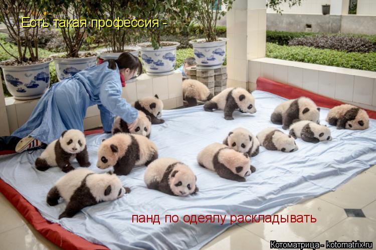 Котоматрица: Есть такая профессия - панд по одеялу раскладывать