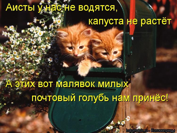 Котоматрица: Аисты у нас не водятся, капуста не растёт А этих вот малявок милых почтовый голубь нам принёс!