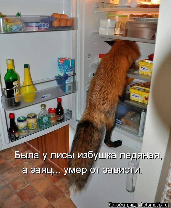Котоматрица: Была у лисы избушка ледяная, а заяц... умер от зависти.