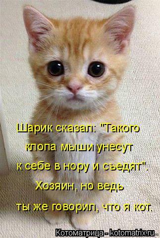 """Котоматрица: Шарик сказал: """"Такого клопа мыши унесут к себе в нору и съедят"""". Хозяин, но ведь  ты же говорил, что я кот."""
