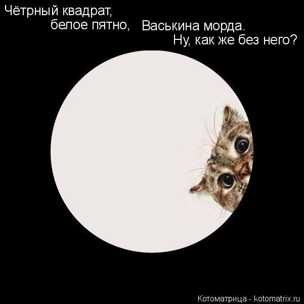 Котоматрица: Чётрный квадрат, белое пятно, Васькина морда. Ну, как же без него?
