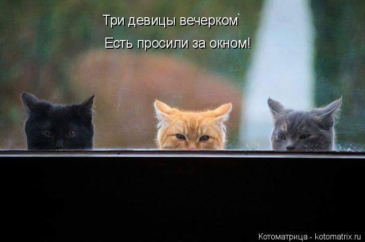 Котоматрица: Три девицы вечерком Есть просили за окном!