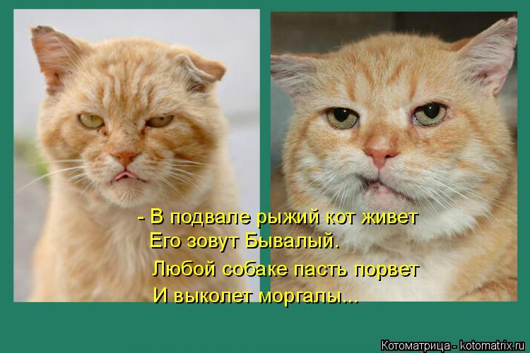 Котоматрица: Его зовут Бывалый. И выколет моргалы... - В подвале рыжий кот живет Любой собаке пасть порвет