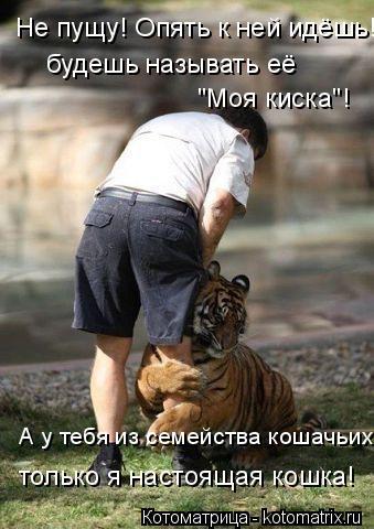 """Котоматрица: будешь называть её Не пущу! Опять к ней идёшь! """"Моя киска""""! А у тебя из семейства кошачьих только я настоящая кошка!"""