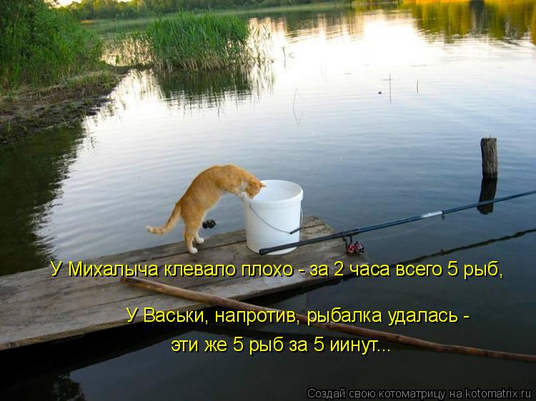 Котоматрица: У Михалыча клевало плохо - за 2 часа всего 5 рыб, У Васьки, напротив, рыбалка удалась - эти же 5 рыб за 5 иинут...